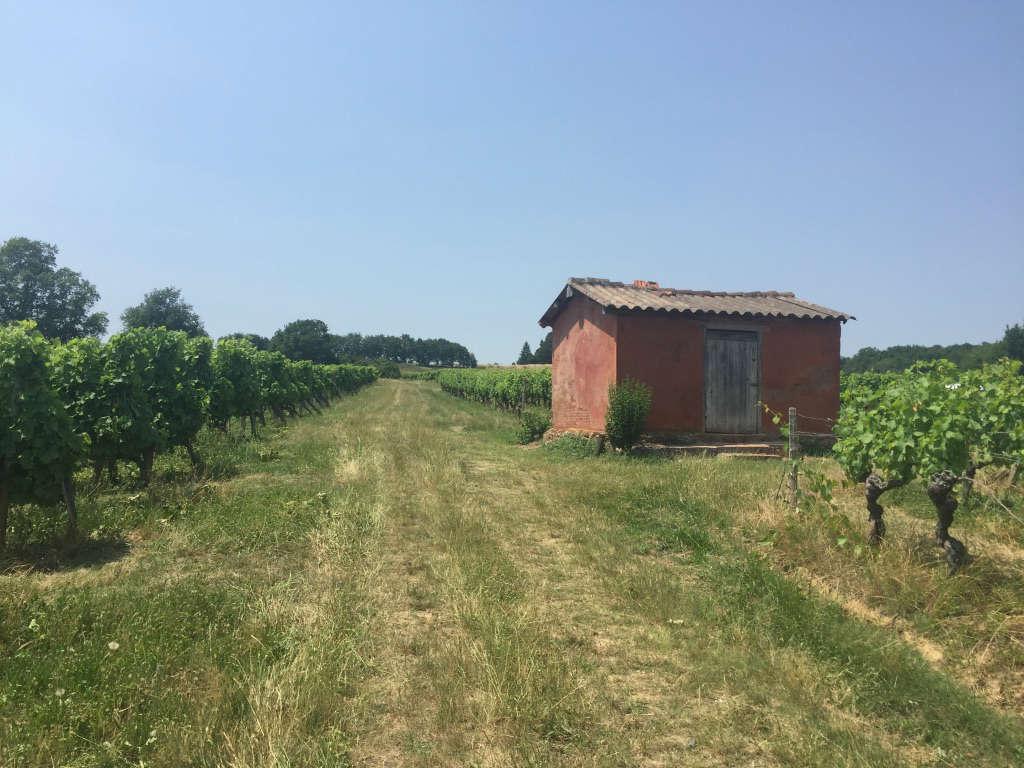 Cabane à vigne - Vignoble Tinon