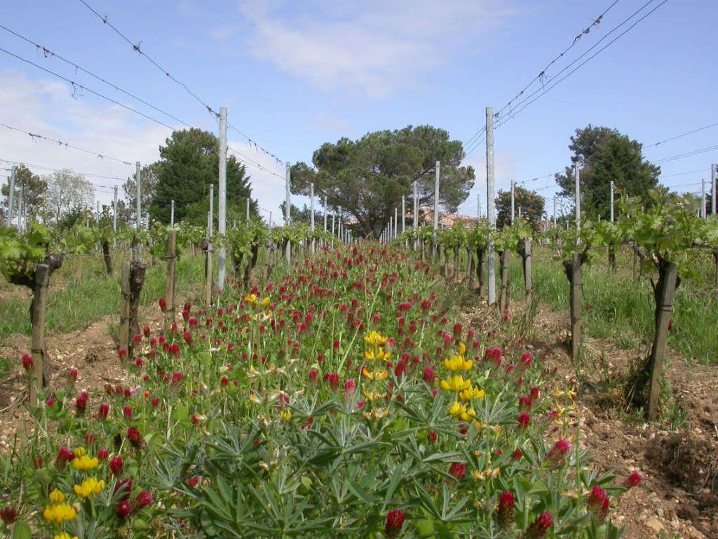 Fleurs & vignes - Château Brethous