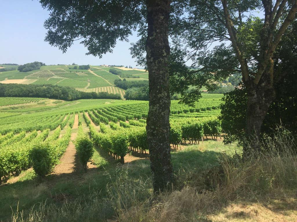 Côteaux Vignoble Tinon