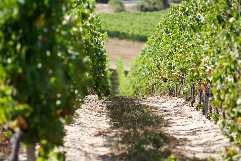 BALADE-PATRIMOINE-maison-des-vins01