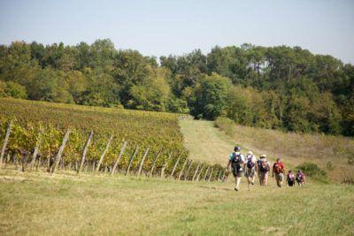 BALADE-VENDANGES-maison-des-vins-1