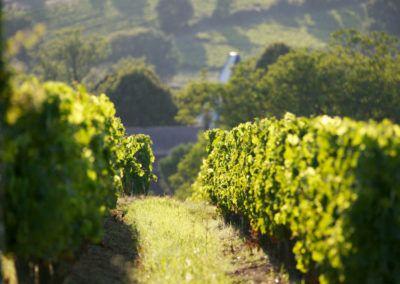 BALADE-PATRIMOINE-maison-des-vins04