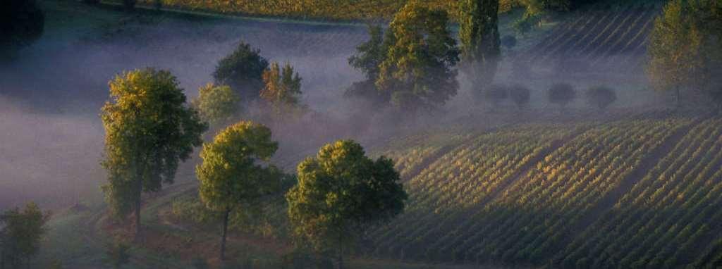 vins,blancs,doux,Bordeaux