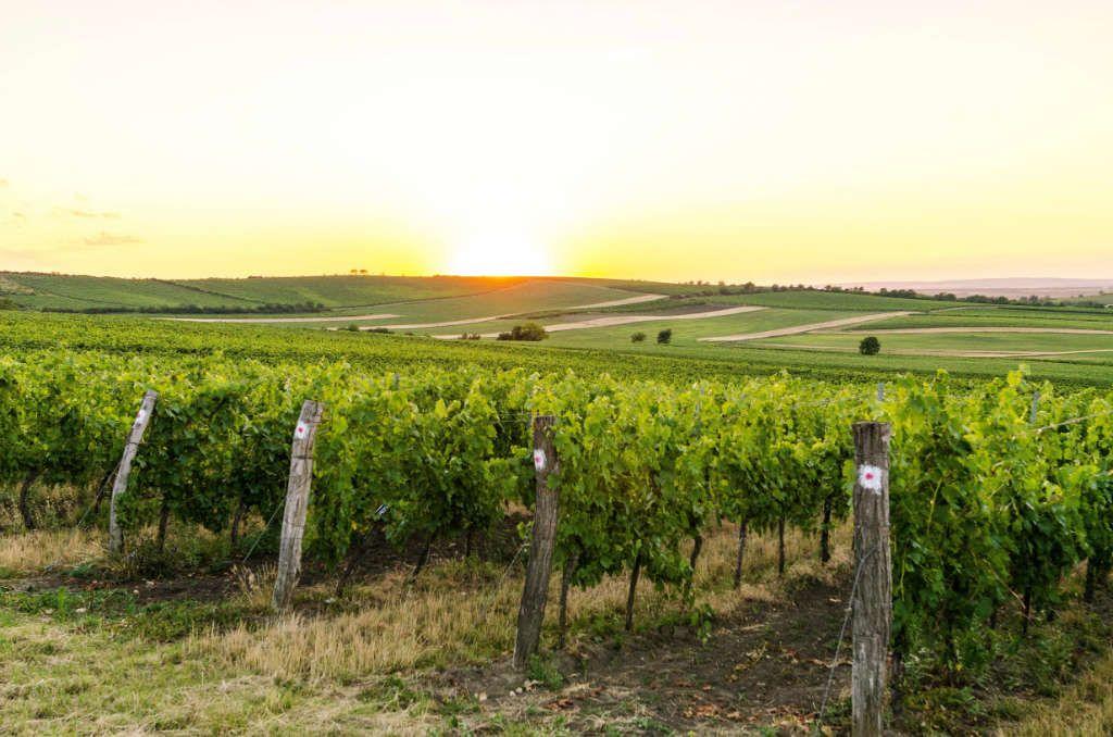 Valider la conformité de l'environnement viticole à l'accueil de ruches