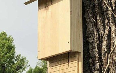 Des nichoirs à chauve-souris sur mesure pour les vignerons