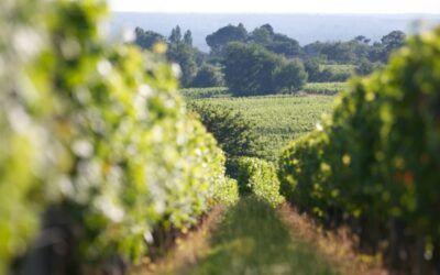 Pulpe, le nouvel élan du vignoble de Bordeaux